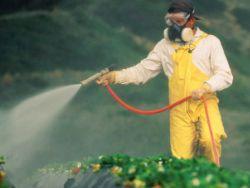 Продукты с пестицидами и бесплодие