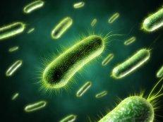Опасные бактерии помогут в борьбе с раком