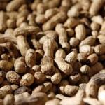 Россельхознадзор забраковал 50 тонн арахиса из США