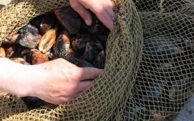 В Севастополе выделят 150 гектаров моря под устрицы и мидии