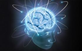 Ученые определили ген, лежащий в основе здорового развития мозга