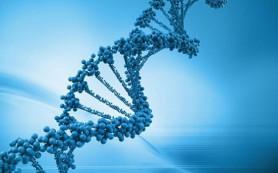 Ученые обнаружили гены, ответственные за регенерацию конечностей