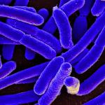 Биологи обнаружили новые свойства иммунитета бактерий