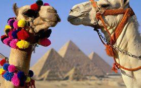 Делегация РФ вновь проверит Египет
