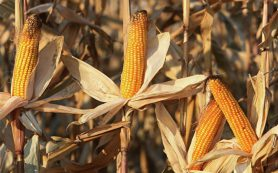 Ученые: не все виды биотоплива оказались полезными для климата