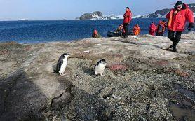 Предприниматели рассказали Путину об антарктических проектах