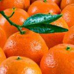Что в Японии творится с мандаринами?