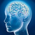 Мозг мужчин стареет быстрее, чем мозг женщин