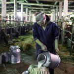 Россельхознадзор предложил ФАС изучить действия «Союзмолока»