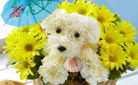 Заказ живых цветов с доставкой по Хмельницкому в интернет-салоне флористики