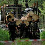 Суд заставит Польшу прекратить вырубку Беловежской пущи
