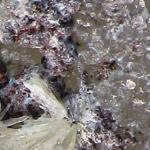 Ученые СПбГУ расшифровали структуру минерала батагаита, ранее не известного науке