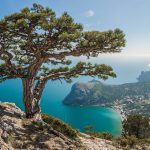 ТО фиксируют рост спроса на Крым