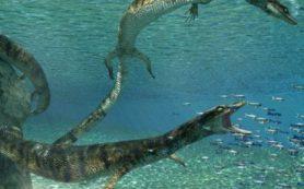 Канадские палеонтологи открыли новый вид древней морской рептилии