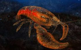 Обнаружены два новых вида креветок. Один из них назвали в честь героя «Властелина колец»