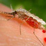 Неинвазивный анализ на малярию