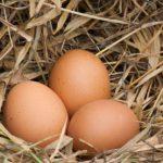 Яйца станут полезнее