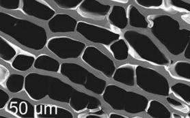 Ученые создали из полимера огнестойкую искусственную древесину