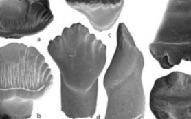 Палеонтологи из России и Германии нашли в Якутии остатки двух древних млекопитающих