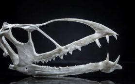 Палеонтологи обнаружили останки самого древнего птерозавра, обитавшего в пустыне