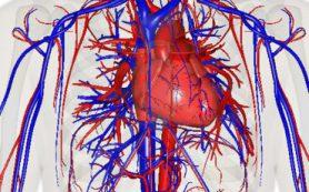Рост человека связан с риском развития варикозного расширения вен