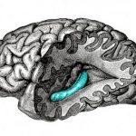 Мозг подобен видеоредактору
