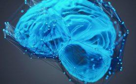 Как мозг контролирует наши действия?