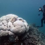 Кораллы Большого Барьерного рифа легче перенесли повышение температуры воды в 2017 году, чем в 20