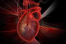В МФТИ вырастили сердечную ткань для тестирования лекарств