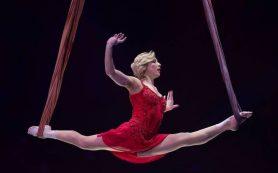 Цирковые артисты из России завоевали бронзу на фестивале «Золотой слон»