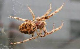 Яд паука остановит гибель нервных клеток