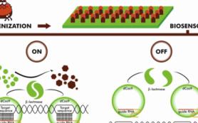 Студенты МГУ создадут биосенсор для экспресс-диагностики боррелиоза