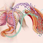Воспаление при диабете 2 типа вызывает не глюкоза