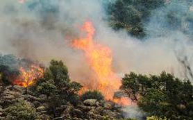 Насколько «природны» природные пожары и стоит ли с ними бороться