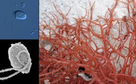 Биологи из РФ и Канады открыли два новых вида хищных микроорганизмов