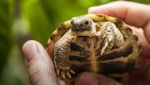 Образ жизни черепах