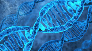 Учёные составили полный атлас микроРНК – важных регуляторных молекул