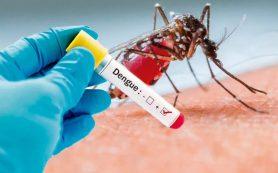 МИД предупредил туристов о вспышке денге в США и Коста-Рике