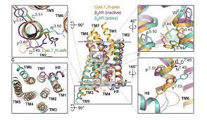 Биофизики исследовали работу лекарств против астмы на молекулярном уровне