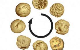 В Китае обнаружен древнейший ископаемый эмбрион