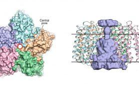 Ученые раскрыли структуру вирусного родопсина