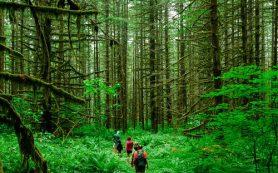 Преимущества бизнеса зелёного туризма