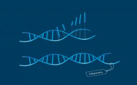 Стволовые клетки человека адаптируются к «медленному» воздействию радиации
