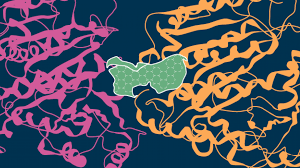 Учёные определили «детали» взаимодействия препаратов и раковых клеток