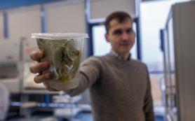 """Учёные из МФТИ научились быстро находить """"газ"""" и """"тормоз"""" растений"""