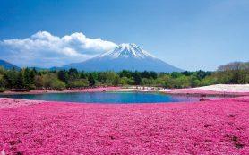 Ростуризм посоветовал туристам отказаться от поездок в японский Хоккайдо
