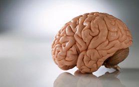 Ученые доказали раннее происхождение человеческого языка
