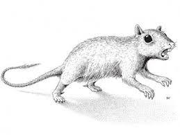 Древнейшие многобугорчатые млекопитающие юрского периода и Сибирь как центр происхождения мультитуберкулят