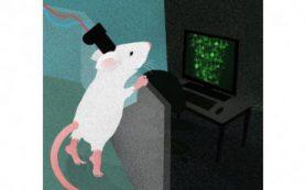 Новый мини-микроскоп наблюдает за внутренней работой мозга крысы