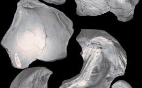 Ископаемые устрицы Каспия